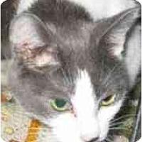 Adopt A Pet :: Oksana - Strathmore, AB