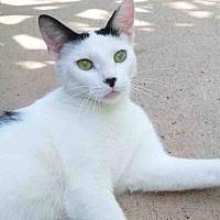 Adopt A Pet :: Adopt MILKY WHITE - Monrovia, CA