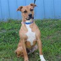 Adopt A Pet :: Will - Valparaiso, IN