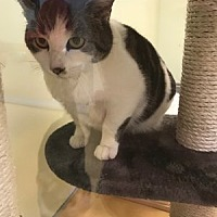 Adopt A Pet :: Lucy - Hudson, NY