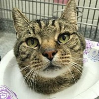 Adopt A Pet :: Milford - Herndon, VA