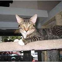 Adopt A Pet :: Oscar - Deerfield Beach, FL