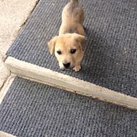 Adopt A Pet :: Nilla - Fair Oaks Ranch, TX