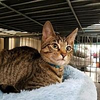 Adopt A Pet :: Tucci - Smithtown, NY