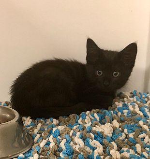 Adopt A Pet :: Alfie  - Edmonton, AB