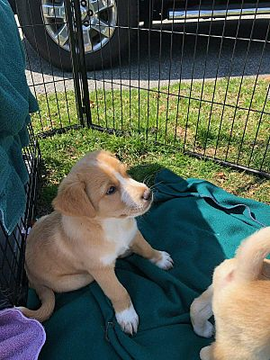 Toms River Nj Mixed Breed Medium Meet Prudence A Pet For Adoption