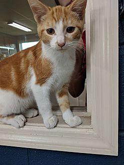 Adopt A Pet :: Penn  - Wilmington, OH