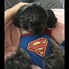 Adopt A Pet :: Curtis