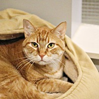 Adopt A Pet :: Butters - Lincoln, NE