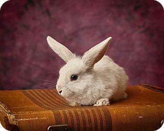 Harrisonburg, VA - Mini Lop  Meet Zoey a Pet for Adoption