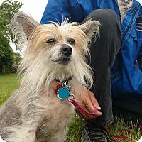 Adopt A Pet :: Tokyo - Pierrefonds, QC