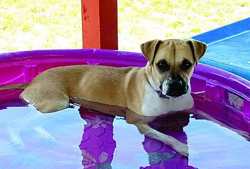 Okeechobee, FL - Boxer  Meet Kane a Pet for Adoption