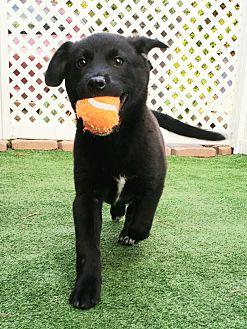 Adopt A Pet :: STELLA  - Snow Hill, NC