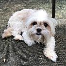 Adopt A Pet :: Chloe - NO LONGER ACCEPTING APPLICATIONS!!