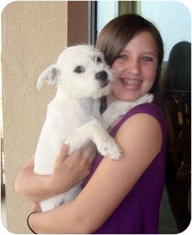 New Braunfels Tx Border Terrier Meet Dixie A Pet For Adoption