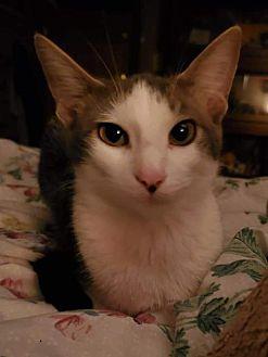 Adopt A Pet :: Meg  - Aurora, CO