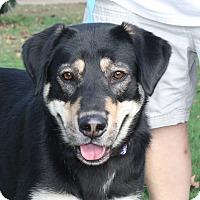 Adopt A Pet :: Harper - Marion, AR