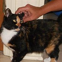 Adopt A Pet :: Pieces - Burgaw, NC