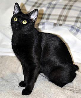 Adopt A Pet :: Jasmine  - Liberty, NC