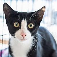 Adopt A Pet :: Emilie - New York, NY