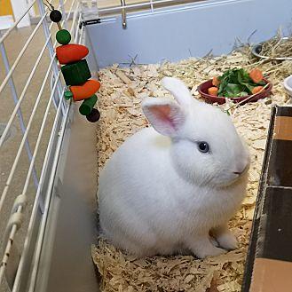 Adopt A Pet :: Ivy  - Moose Jaw, SK