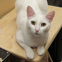 Adopt A Pet :: Gabby - Wheaton, IL