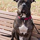 Adopt A Pet :: Rocko