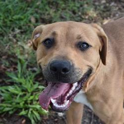 Craigslist Panama City Florida Pets - PetsWall