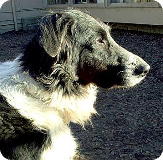 Cincinnati Oh Border Collie Meet Eliza A Pet For Adoption
