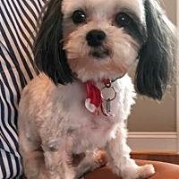 Adopt A Pet :: Bailey - Atlanta, GA