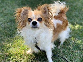 Adopt A Pet :: Prince Ali  - Santa Clara, CA