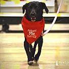 Adopt A Pet :: Angela
