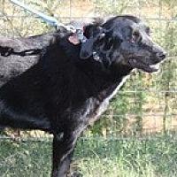 Adopt A Pet :: Flo - Newnan, GA
