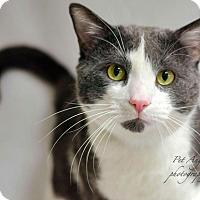 Adopt A Pet :: Cruz - Santa Fe, NM