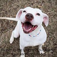 Adopt A Pet :: Shelby - Dallas, GA