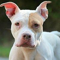 Adopt A Pet :: Binx - Covington, TN