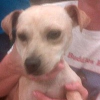 Adopt A Pet :: Georgio - Fresno, CA