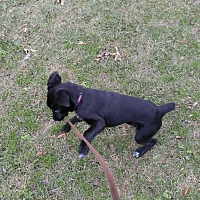 Adopt A Pet :: Lady - Goldsboro, NC