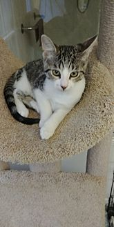Adopt A Pet :: Bandit  - Floral City, FL