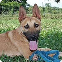 Adopt A Pet :: Elvis-Reduced fee $300 - Hagerstown, MD