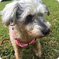 Adopt A Pet :: PEPPER (SRC1894) in NC - Lenoir, NC