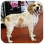 Photo 3 - Cocker Spaniel Dog for adoption in Coral Springs, Florida - Lucy