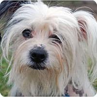 Adopt A Pet :: Remi - Whitewright, TX