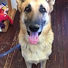 Adopt A Pet :: Keanu