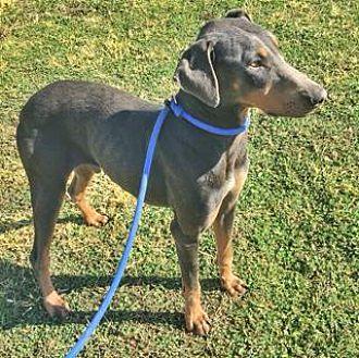 Adopt A Pet :: Grayson  - Albuquerque, NM