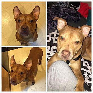 Adopt A Pet :: Kanye  - Anchorage, AK