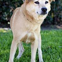 Adopt A Pet :: Ralph - San Diego, CA