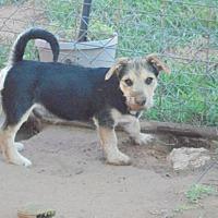 Adopt A Pet :: Oscar - Anton, TX