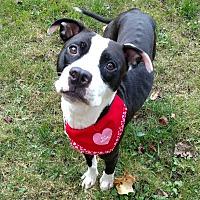 Adopt A Pet :: Georgia - Sharon Center, OH