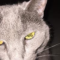 Adopt A Pet :: Sophie Delyla - Baltimore, MD